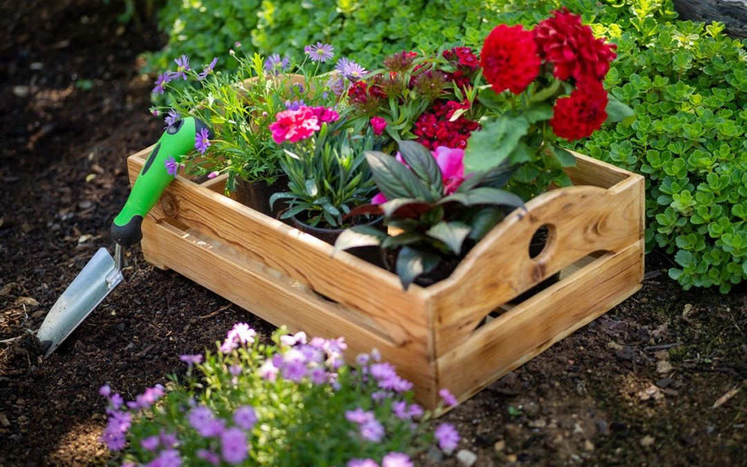The Powerful Parallel Between Gardening and Recovery